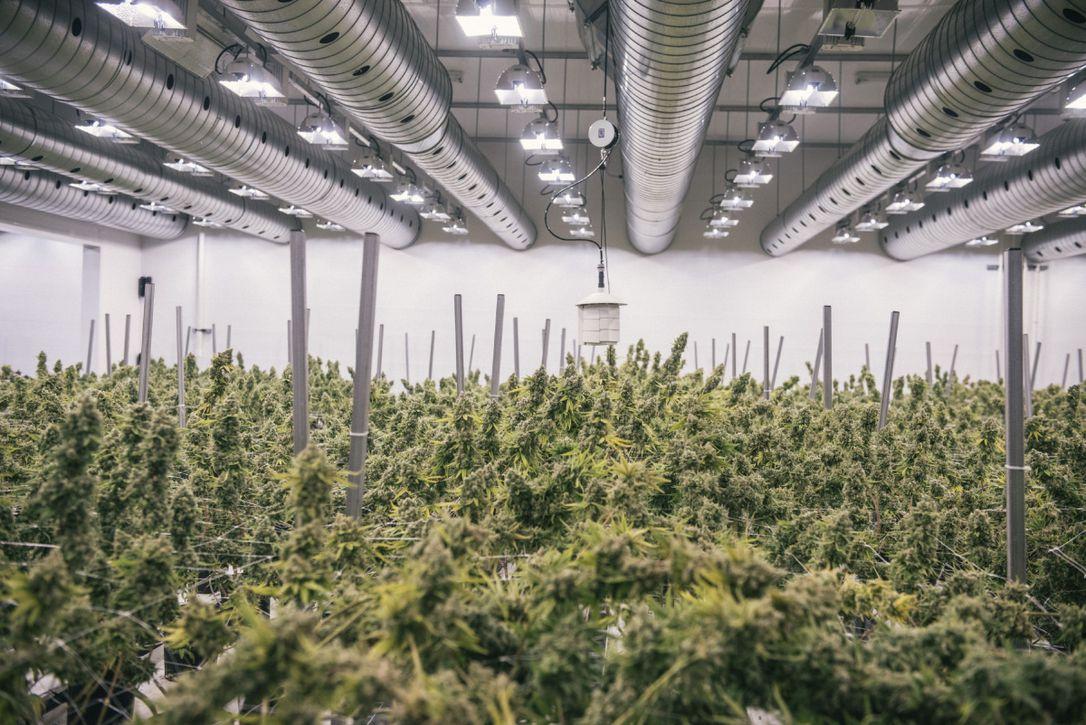 comprare azioni canopy growth