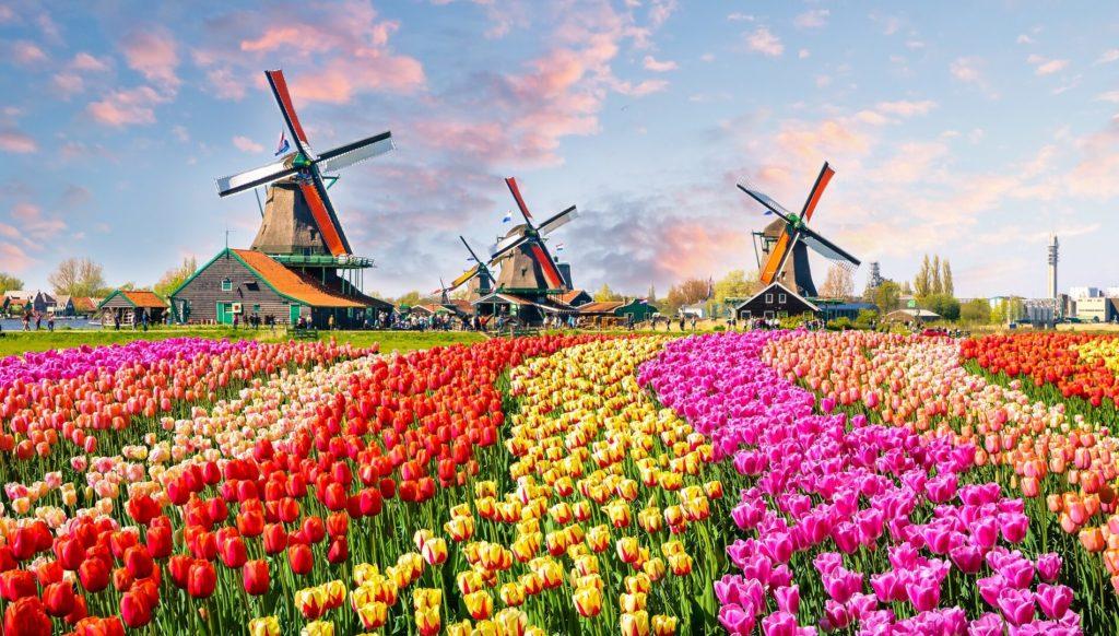migliori azioni olandesi